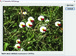 CVB Polimago - example screenshot for classification of flowers